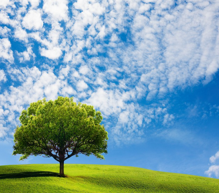 Vinylová Tapeta Strom v oblasti - Roční období