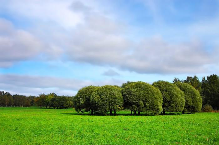 Vinylová Tapeta Krásné zelené louce s vrbami - Roční období