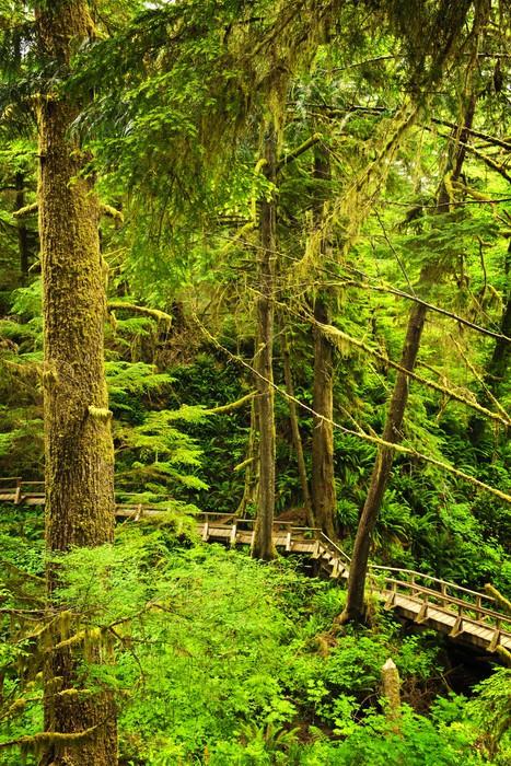 Vinylová Tapeta Cesta do mírného deštného pralesa - Lesy