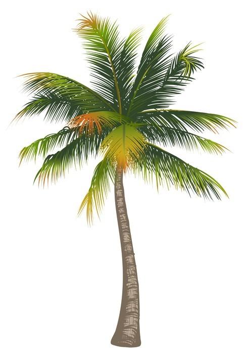 Sticker noix de coco palmier sur un fond blanc pixers - Palmier noix de coco ...