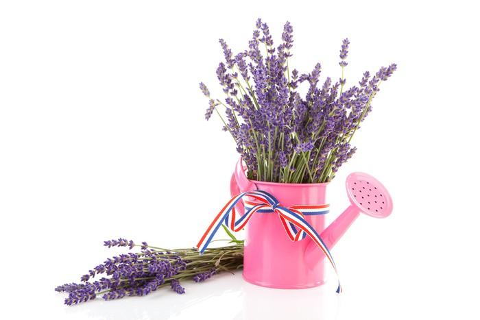 Vinyl-Fototapete Rosa Gießkanne mit gezupften Lavendel auf weißem Hintergrund - Blumen