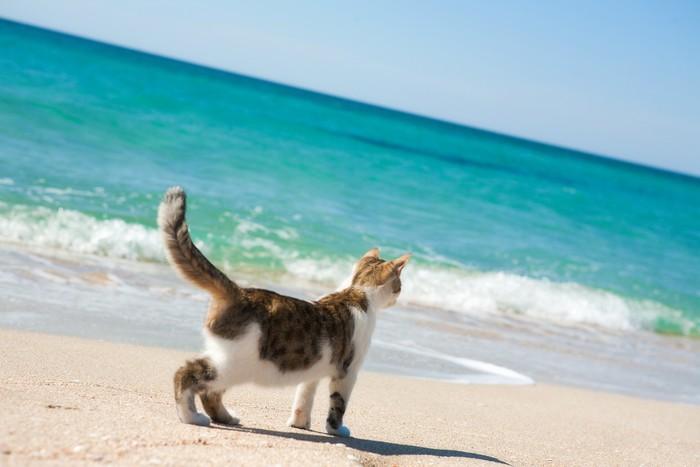 Vinylová Tapeta Kočka na pláži - Savci