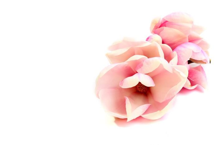 Vinylová Tapeta Dekorace magnólie - Květiny