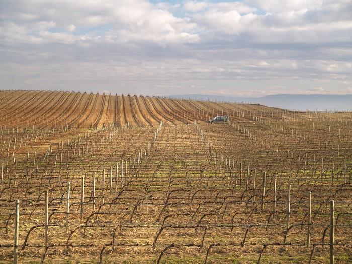 Vinylová Tapeta Viñas en La Rioja, España - Zemědělství