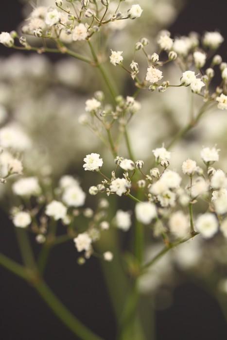 Vinylová Tapeta Gypsophila s malou hloubkou ostrosti - Květiny