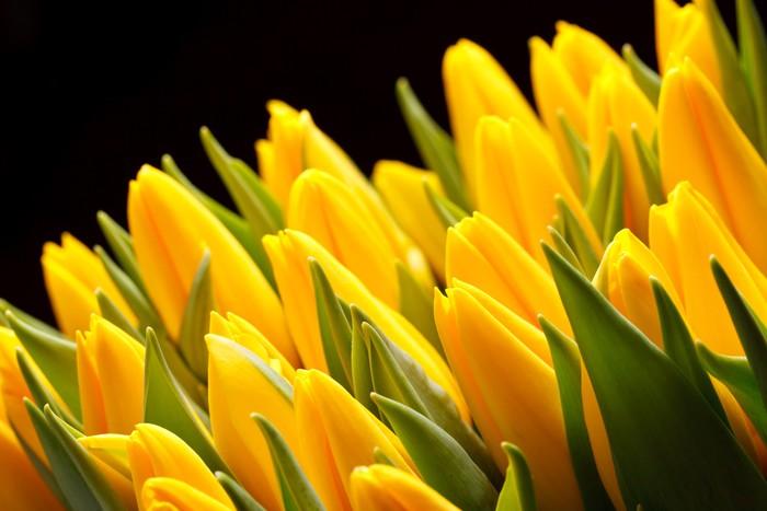 Vinylová Tapeta Krásné tulipány - Témata