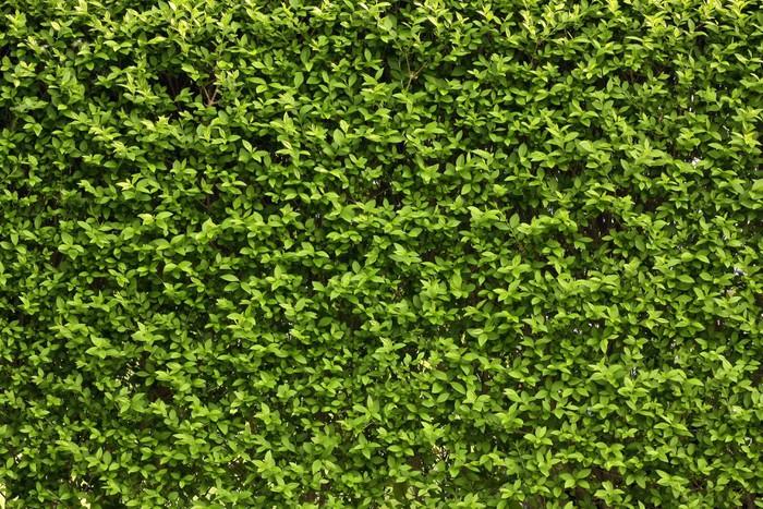 Vinylová Tapeta Zelené listy zeď na pozadí - Roční období