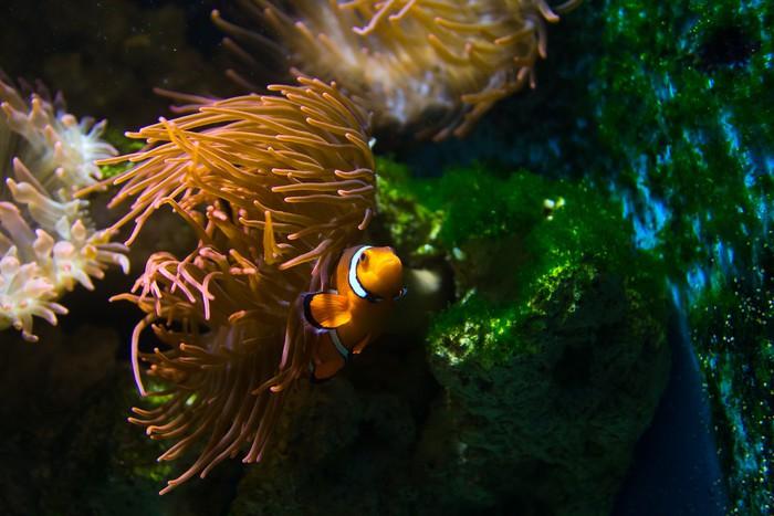 Vinylová Tapeta Nemo - Vodní a mořský život