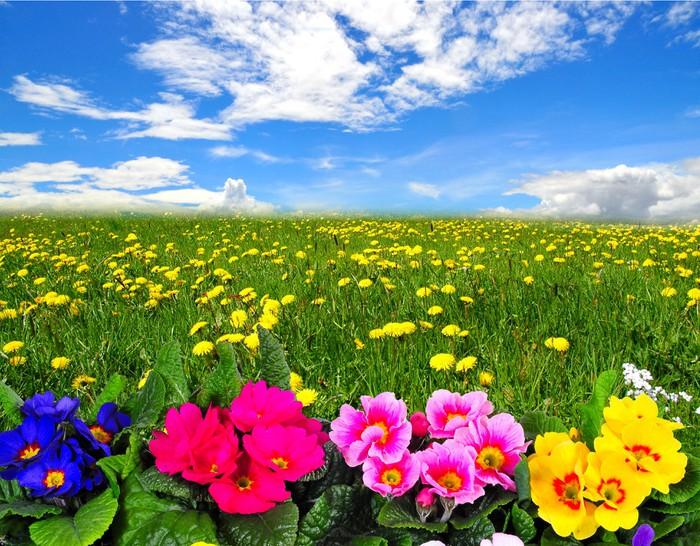 Carta da Parati Nubi paesaggio prato di fiori • Pixers® - Viviamo ...