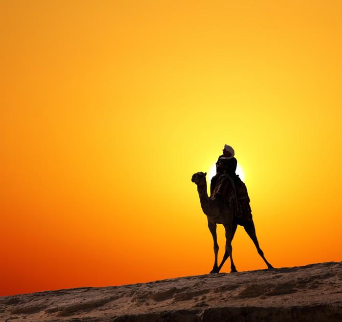 tableau sur toile b douin sur le chameau silhouette contre le lever du soleil pixers nous. Black Bedroom Furniture Sets. Home Design Ideas