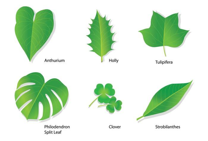 Carta da parati foglie tropicali con nomi botanici for Carta da parati vinile
