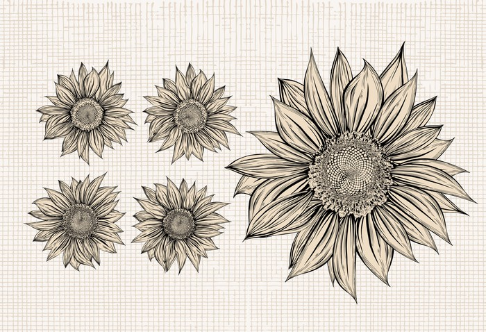 sunflower drawing isolated objects wall mural pixers we live to