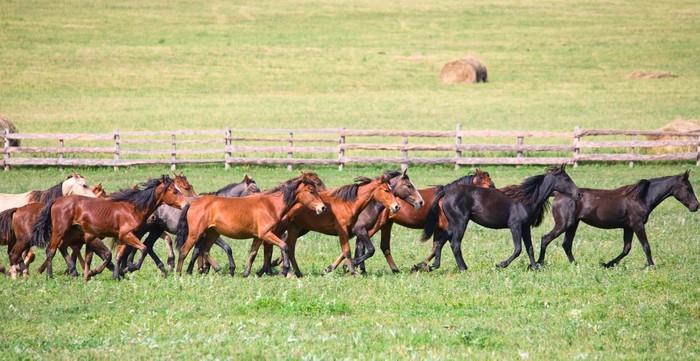 Papier peint un troupeau de jeunes chevaux pixers - Papier peint chevaux pour chambre ...