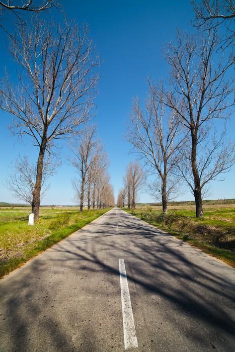 Vinylová Tapeta Prázdné silnici pod modrou oblohou, přes řadami stromů - Lesy