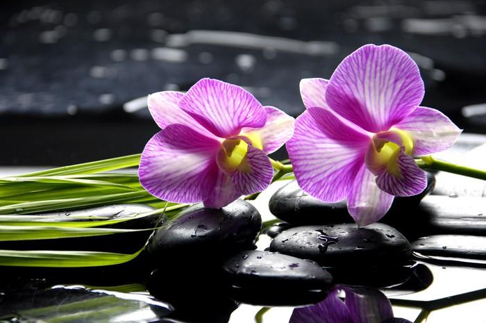 fototapete oriental spa mit orchidee mit und gr ne pflanze auf zen steine pixers wir leben. Black Bedroom Furniture Sets. Home Design Ideas