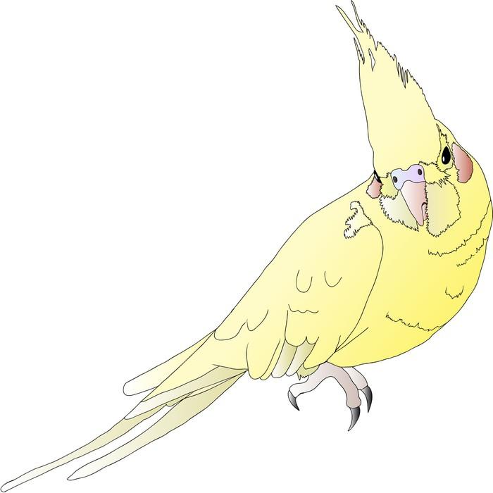 Vinylová Tapeta Parrot - Korella - Ptáci