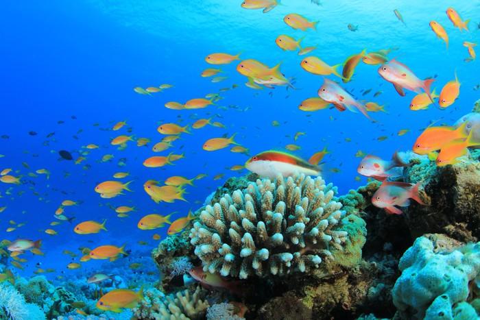 papier peint poissons tropicaux sur les r cifs coralliens. Black Bedroom Furniture Sets. Home Design Ideas