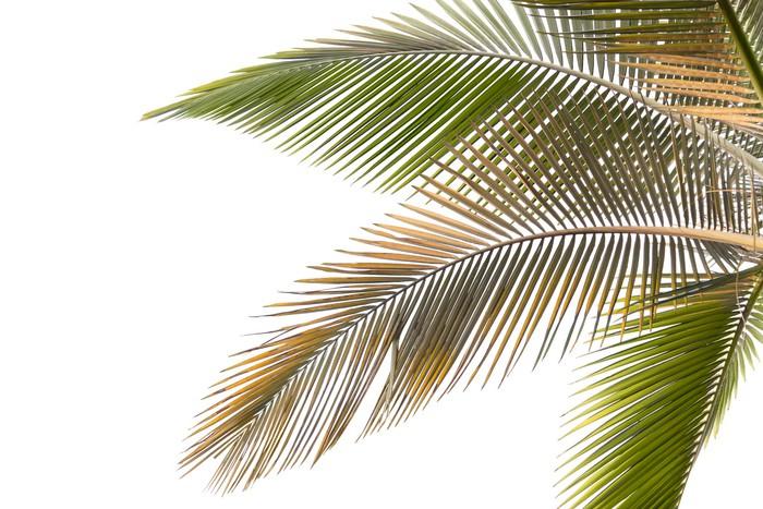 Tableau sur toile feuilles de palmiers dess ch s et jaunes pixers nous vivons pour changer - Palmier hawaien feuilles jaunes ...