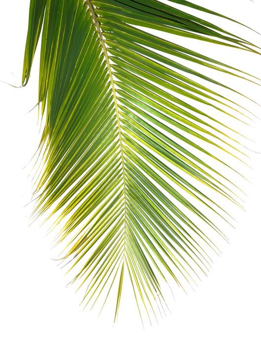 papier peint vert feuille de palmier pixers nous vivons pour changer. Black Bedroom Furniture Sets. Home Design Ideas