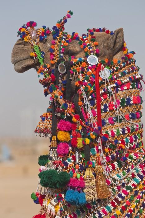 Vinylová Tapeta Desert Festival v Jaisalmer, Rajasthan, Indie - Asie