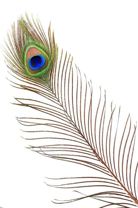 Carta da parati particolare occhio piuma di pavone for Carta da parati particolare