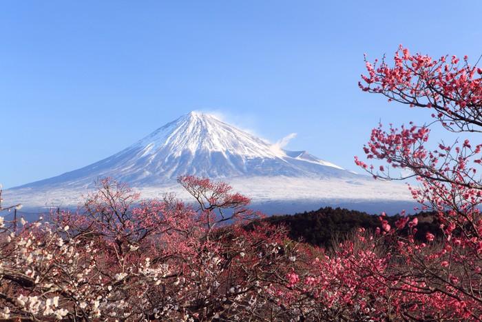 Vinylová fototapeta Mt. Fuji s japonskou Plum květy - Vinylová fototapeta