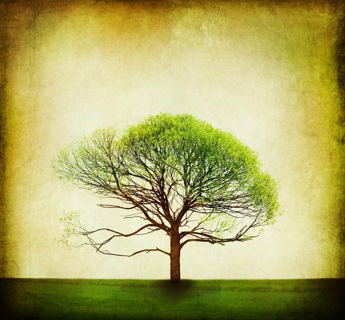 Vinylová fototapeta Příroda design. Vintage strom pozadí - Vinylová fototapeta