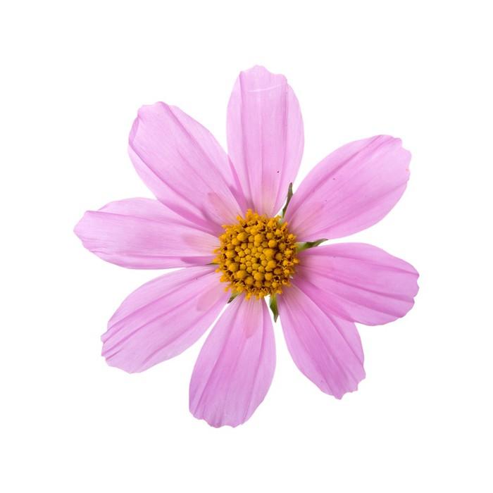 papier peint fleur rose pixers nous vivons pour changer. Black Bedroom Furniture Sets. Home Design Ideas