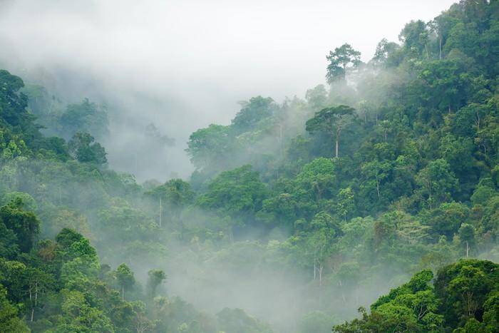 Kwadryptyk Las deszczowy poranek mgła - Tematy