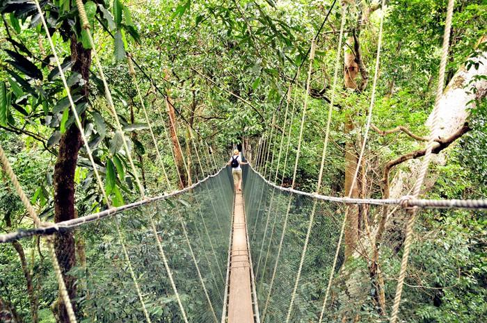 fotomural puente colgante en las cuerdas de la selva