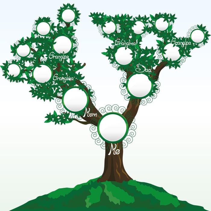 Fototapeta Drzewo Genealogiczne Z Miejscem Na Zdj Cia Lub