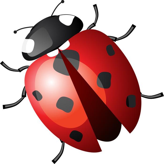 Ladybug Veya Uğur B 246 Ceği Vekt 246 R B 246 Cek 199 ıkartması