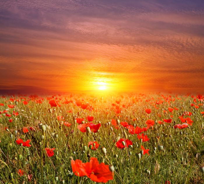 Adesivo Tramonto sul prato di fiori • Pixers® - Viviamo per il ...
