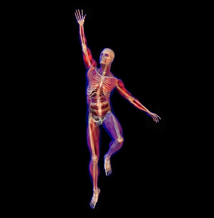 Aufkleber X-ray Darstellung der menschlichen Anatomie und des ...