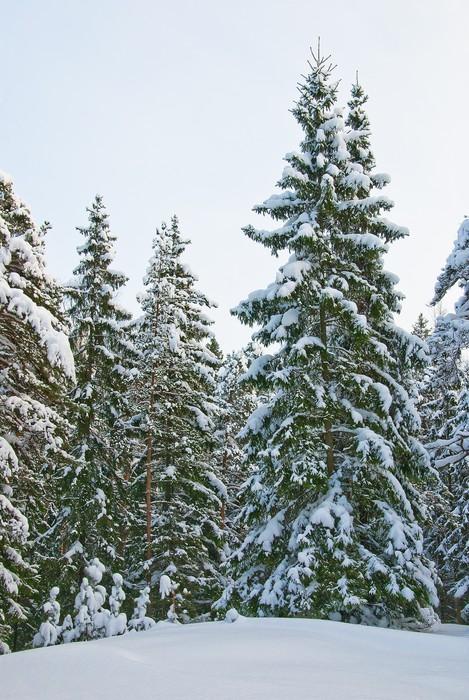 Vinylová Tapeta Zimní les - Lesy