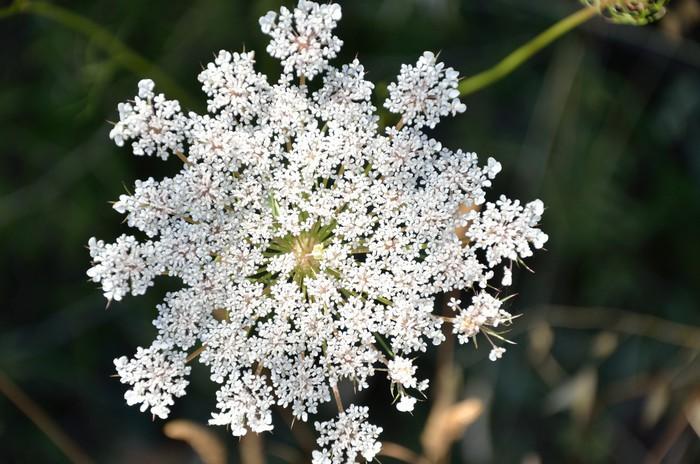 Vinylová Tapeta Fleur de Sauvage carotte - Květiny