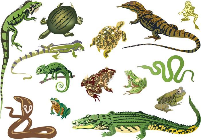 Vinilo Pixerstick Conjunto de reptiles y anfibios aislados ... 10 Examples Of Reptiles