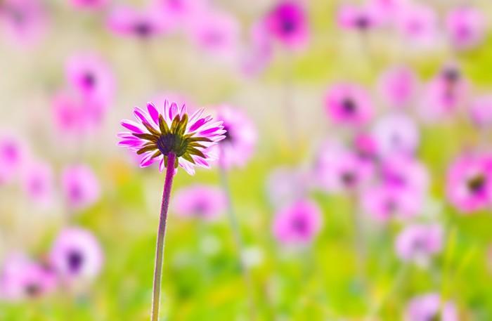 Vinylová Tapeta Růžový květ pole - Struktury