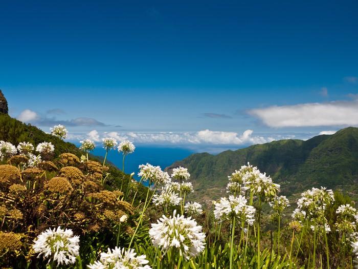 Vinylová Tapeta Blumeninsel Madeira - Prázdniny