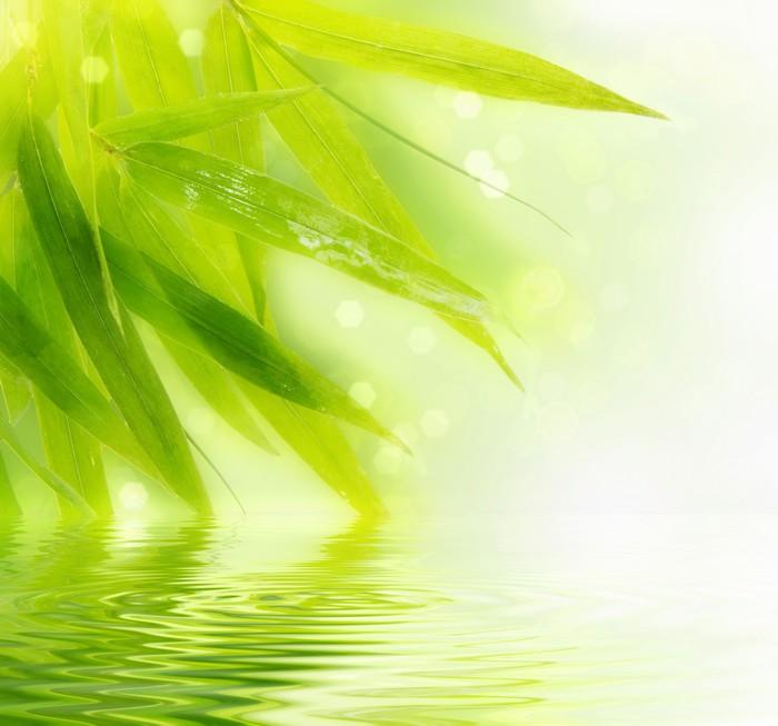 papier peint bambou humide laisse avec reflet dans l 39 eau pixers nous vivons pour changer. Black Bedroom Furniture Sets. Home Design Ideas