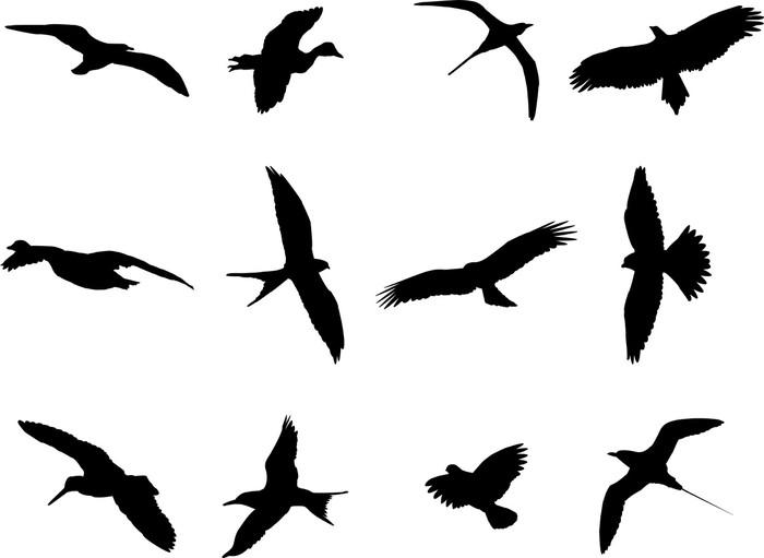 Vinylová Tapeta Ptáci silueta kolekce - vektor - Ptáci