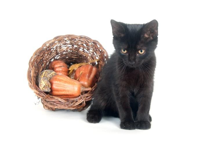 Vinylová fototapeta Černá kočka a hojnost - Vinylová fototapeta