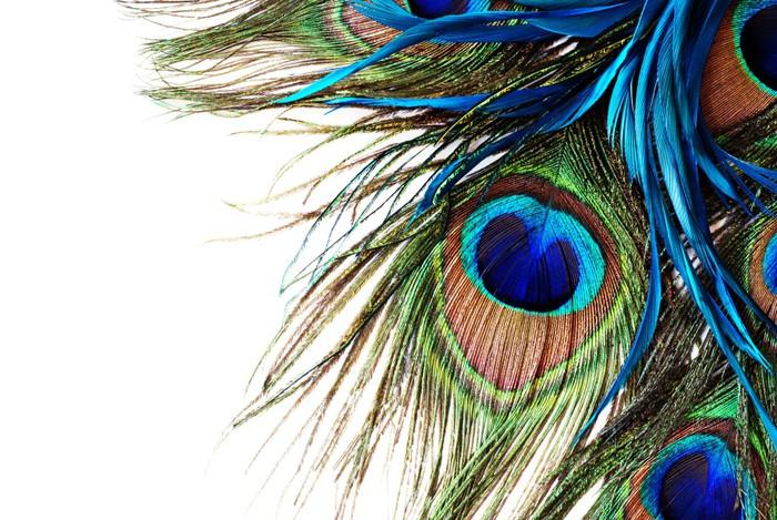 Papier Peint Vinyle Peacock feather - iStaging