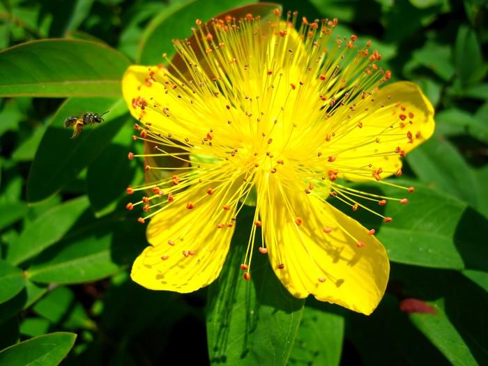 Vinylová Tapeta Bzučení včel - Květiny
