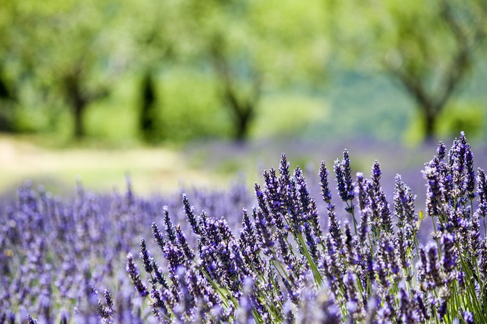 Vinylová Tapeta Provence, typickou krajinu. Francie, - Venkov