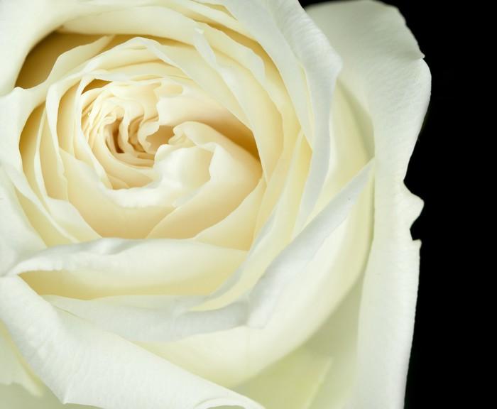 Papier peint rose blanc cass pixers nous vivons pour for Papier peint blanc casse