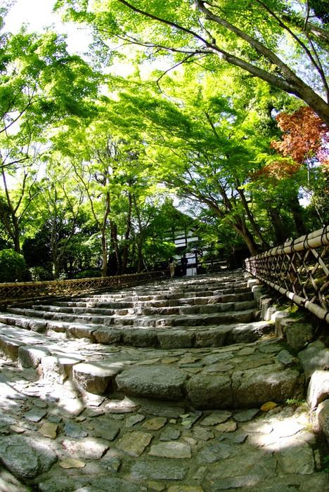 Vinylová Tapeta 新 緑 の も み じ と 石 の 階段 - Prázdniny