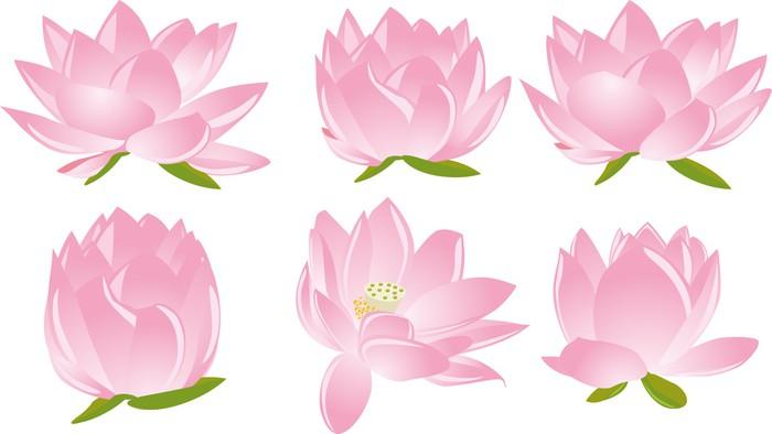 Vinylová Tapeta Ilustrace lotos (leknín) - Roční období