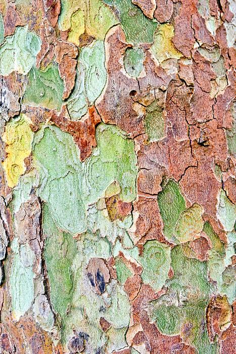 Nálepka Pixerstick Kůra Sycamore - Stromy
