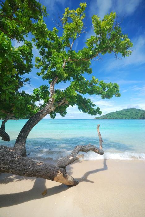 Vinylová Tapeta Stromy v blízkosti pláže - Ostrovy